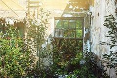 La salle d'une usine abandonnée sans toit avec les fenêtres cassées, envahie avec des usines Images libres de droits