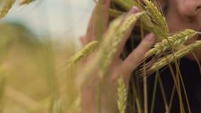 La salute della donna di fertilità, i raccolti femminili del grano di tocchi, sognanti le memorie tristi stock footage
