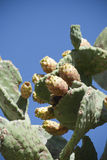 La Sardaigne. Poire de cactus Photo stock
