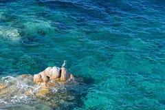 La Sardegna, Italia - sedili dell'uccello sulla roccia Fotografia Stock Libera da Diritti