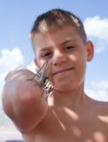 La sauterelle se repose sur le bras du garçon Image stock