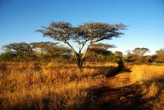 La savane Photos libres de droits