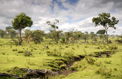 La savane Photo stock