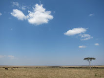 La savane Photographie stock libre de droits