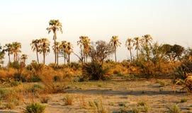La savane africaine Images libres de droits