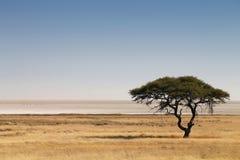La savane africaine Photo libre de droits