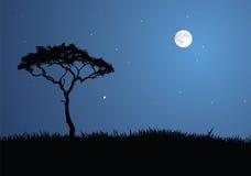 La savane allumée par lune Photo stock