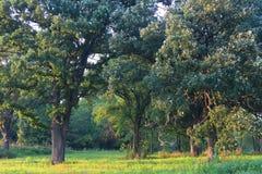 La savane de chêne de l'Illinois Photo libre de droits