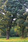 La savane de chêne en Illinois Photographie stock libre de droits