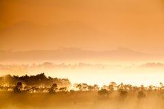 La savane de la Thaïlande Images stock