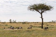 La savane de parc de Mara de masai du Kenya Images stock
