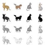 La savane de race de chat, Norvégien Forest Cat, Américain Shorthair, Peterbald Différentes races des icônes réglées de collectio Photos stock