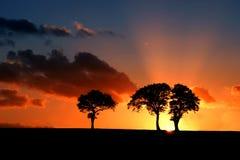 La savane du Suffolk Photographie stock libre de droits