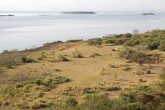 La savane et lac africains Photo stock