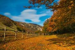 La scène d'or d'automne en parc, avec la chute part Image libre de droits