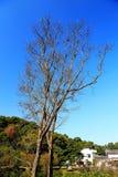 La scène d'hiver de l'île de Junshan dans la région du Lac Dongting Images libres de droits
