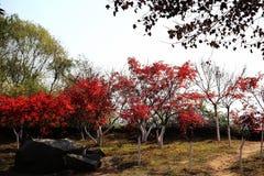 La scène d'hiver de l'île de Junshan dans la région du Lac Dongting Photographie stock