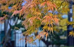 La scène de l'automne a coloré des feuilles Images stock