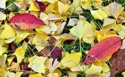 La scène des feuilles tombées de l'automne a coloré des feuilles Photo stock