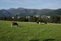 La scène des maisons BRITANNIQUES du nord a placé dans les montagnes et les arbres Images stock