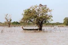 La scène du zone inondable de lac sap de Tonle avec le canoë a amarré près de l'arbre submergé image libre de droits