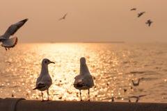 La scène romantique, oiseaux apprécient une vue de coucher du soleil Photographie stock