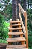 La scala nella foresta Fotografia Stock