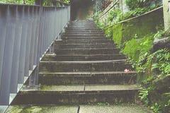La scala nella pioggia, coperta da muschio e dalla felce immagine stock libera da diritti