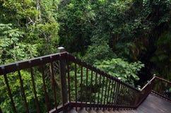 La scala trascura il baldacchino del parco nazionale Queensla di Daintree Fotografie Stock Libere da Diritti