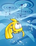 La scelta del goldfish Fotografia Stock Libera da Diritti