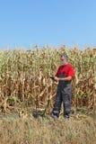 La scena agricola, l'agricoltore o l'agronomo ispezionano il campo di grano Fotografia Stock
