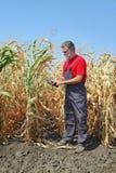 La scena agricola, l'agricoltore o l'agronomo ispezionano il campo di grano Fotografia Stock Libera da Diritti