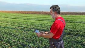La scena agricola, l'agricoltore o l'agronomo ispezionano il giacimento di grano Fotografia Stock