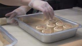 La scena: Il cuoco presenta i panini pronti con cannella su un vassoio di cottura del metallo Produzione dei rotoli di cannella P video d archivio
