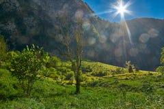 La scena retroilluminata con il Sun si svasa vicino a Konigsee della Germania Fotografia Stock