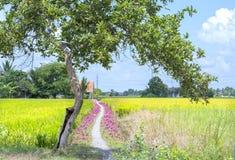 La scena rurale con una strada non asfaltata che conduce alla casa Fotografie Stock Libere da Diritti