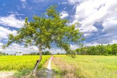 La scena rurale con una strada non asfaltata che conduce alla casa Immagini Stock Libere da Diritti