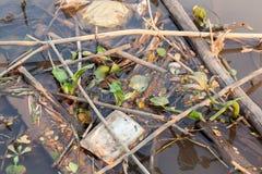 La schiuma ed i ramoscelli di galleggiamento allegati al deposito prolungato cucono Fotografia Stock Libera da Diritti