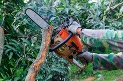 La scie coupant le bois Images stock