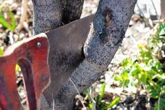 La scie coupe une branche outre d'un arbre image stock