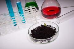 La Science, biologie, écologie, recherche et concept de personnes - fermez-vous des mains de scientifique tenant la boîte de Pétr images stock