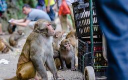 La scimmia Immagini Stock Libere da Diritti