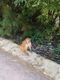 La scimmia Immagine Stock Libera da Diritti