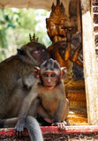 La scimmia con Buddha nei precedenti Immagine Stock Libera da Diritti