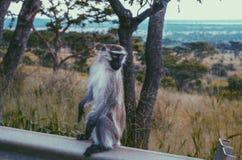 La scimmia fa Immagini Stock Libere da Diritti