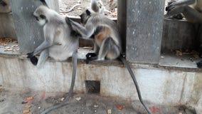 La scimmia gode di Fotografia Stock