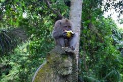 La scimmia mangia Immagine Stock Libera da Diritti