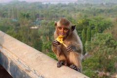 La scimmia mangia la banana Fotografia Stock Libera da Diritti
