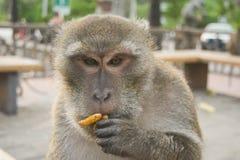 La scimmia mangia una nocciola Fotografia Stock Libera da Diritti