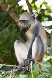 La scimmia non parla la malvagità fotografie stock